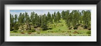 Framed Horses on roundup, Billings, Montana, USA