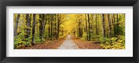 Framed Trees along a pathway in autumn, Hiawatha National Forest, Alger County, Upper Peninsula, Michigan, USA