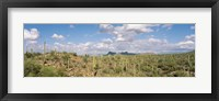 Framed Saguaro National Park Tucson AZ USA