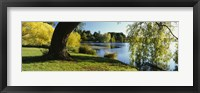 Framed Willow Tree By A Lake, Green Lake, Seattle, Washington State, USA