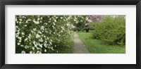 Framed Path In A Park, Richmond, Virginia, USA