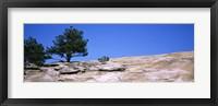 Framed Trees on a mountain, Stone Mountain, Atlanta, Fulton County, Georgia