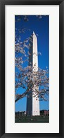 Framed Cherry Blossom in front of an obelisk, Washington Monument, Washington DC, USA