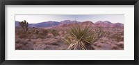 Framed Yucca plant in a desert, Red Rock Canyon, Las Vegas, Nevada, USA