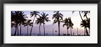 Framed Palm trees on the beach, Waikiki, Honolulu, Oahu, Hawaii (black and white)