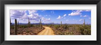 Framed Road, Saguaro National Park, Arizona, USA