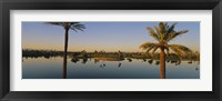 Framed Palm trees at the lakeside, Phoenix, Maricopa County, Arizona, USA