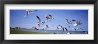 Framed Flock of seagulls flying on the beach, New York State, USA