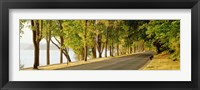 Framed Trees on both sides of a road, Lake Washington Boulevard, Seattle, Washington State, USA