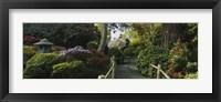 Framed Plants in a garden, Japanese Tea Garden, San Francisco, California, USA