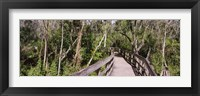 Framed Boardwalk passing through a forest, Lettuce Lake Park, Tampa, Hillsborough County, Florida, USA