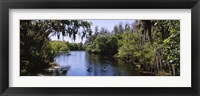 Framed River passing through a forest, Hillsborough River, Lettuce Lake Park, Tampa, Hillsborough County, Florida, USA