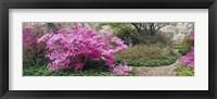 Framed Azalea flowers in a garden, Garden of Eden, Ladew Topiary Gardens, Monkton, Baltimore County, Maryland, USA
