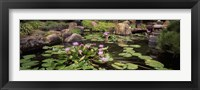 Framed Lotus blossoms, Japanese Garden, University of California, Los Angeles, California