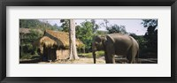 Framed Elephant standing outside a hut in a village, Chiang Mai, Thailand