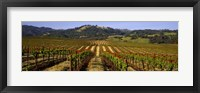 Framed Vineyard, Geyserville, California, USA