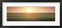 Framed View Of The Corn Field During Sunrise, Sacramento County, California, USA