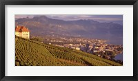Framed Vineyard at a hillside, Lake Geneva, Vevey, Vaud, Switzerland
