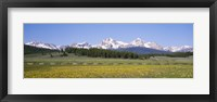 Framed Flowers in a field with a mountain in the background, Sawtooth Mountains, Sawtooth National Recreation Area, Stanley, Idaho, USA