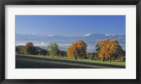Framed Switzerland, Reusstal, Panoramic view of Pear trees in the Swiss Midlands
