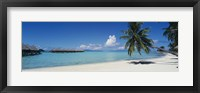 Framed Palm Tree On The Beach, Moana Beach, Bora Bora, Tahiti, French Polynesia
