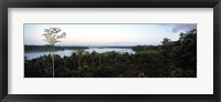 Framed Trees in a forest, Amazon Rainforest, Amazon, Peru