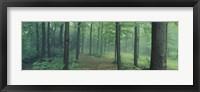 Framed Chestnut Ridge Park, Orchard Park, New York State