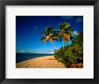 Framed Palm trees and beach, Tahiti French Polynesia