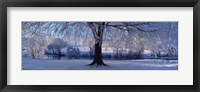 Framed Winter Trees Perkshire Scotland