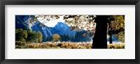 Framed Half Dome, Yosemite National Park, California, USA