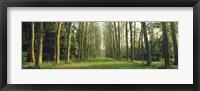 Framed Trees Versailles France