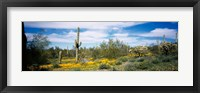 Framed Poppies and cactus on a landscape, Organ Pipe Cactus National Monument, Arizona, USA