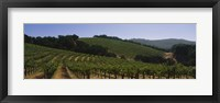 Framed Vineyard on a landscape, Napa Valley, California, USA