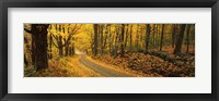 Framed Fall woods Monadnock NH USA