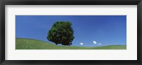 Framed View Of A Lone Tree On A Hillside In Summer