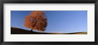 Framed View Of A Lone Tree On A Hill In Fall