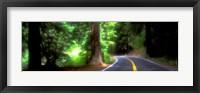 Framed Road, Redwoods, Mendocino County, California, USA
