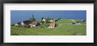 Framed Aerial View Of Vineyards By A Lake, Lake Geneva, Vaud, Switzerland