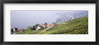 Framed Vineyards, Lausanne, Lake Geneva, Switzerland