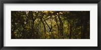 Framed Sunset over a forest, Monteverde Cloud Forest, Costa Rica