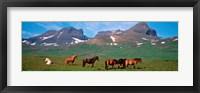 Framed Horses in Borgarfjordur, Iceland