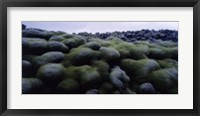 Framed Close-up of moss on rocks, Iceland