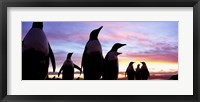 Framed Silhouette of a group of Gentoo penguins, Falkland Islands (Pygoscelis papua)