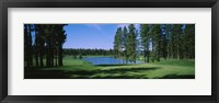 Framed Trees on a golf course, Edgewood Tahoe Golf Course, Stateline, Nevada, USA