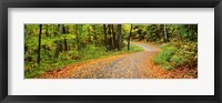 Framed Road passing through a forest, Country Road, Peacham, Caledonia County, Vermont, USA