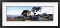 Framed Bare tree near rocks, Haytor Rocks, Dartmoor, Devon, England