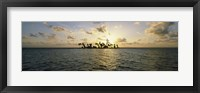 Framed Silhouette of palm trees on an island, Placencia, Laughing Bird Caye, Victoria Channel, Belize