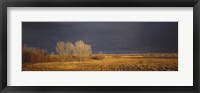 Framed Flock of Snow, Bosque del Apache National Wildlife Reserve, Socorro County, New Mexico