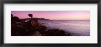 Framed Silhouette of a cypress tree at coast, The Lone Cypress, 17 mile Drive, Carmel, California, USA