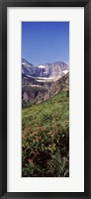 Framed Alpine wildflowers on a landscape, US Glacier National Park, Montana, USA